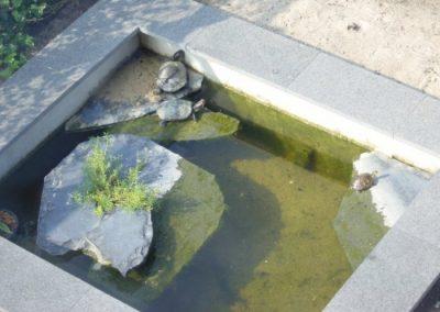 schildpadden-vijver-008