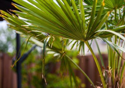Tuin met travertin tegels
